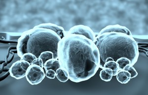 Stem Cells: The Next Treatment for Anti-Aging?